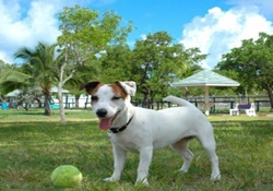 dog park in the florida keys