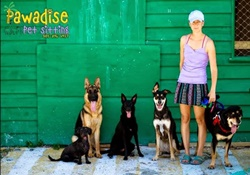 doggy daycare in the florida keys