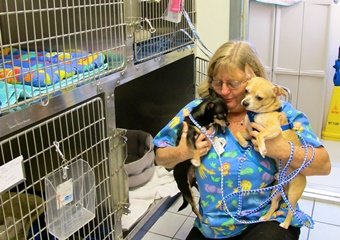 marathon veterinary hospital has boarding veterinarian pet friendly florida keys